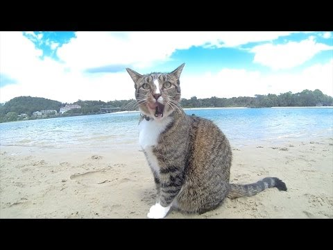 "HAPPY DOGS & CAT in AUSTRALIA - Pharrell Williams ""HAPPY"" song"