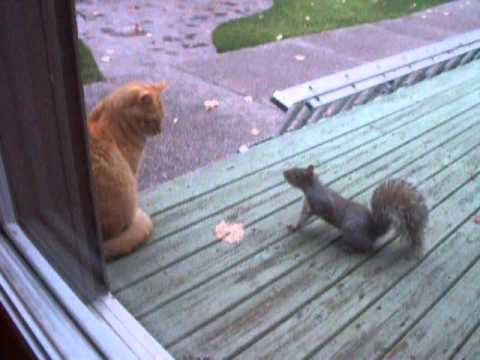 squirrel steals peanuts from cat 2