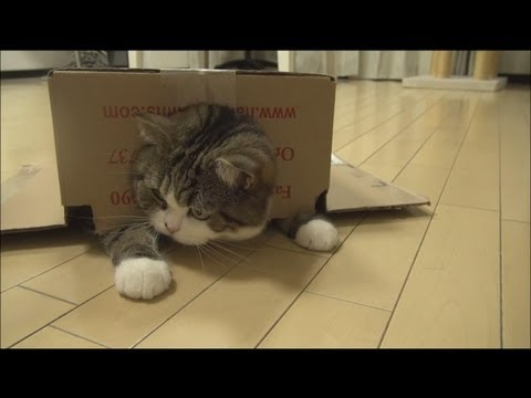 箱とねこ10。-A box and Maru 10.-