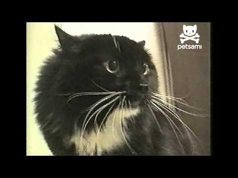 Talking cat says Oh Long Johnson