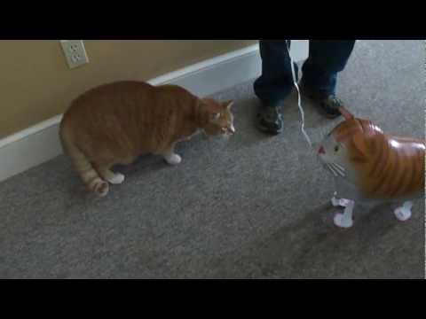 Bert the Cat vs Cat Balloon
