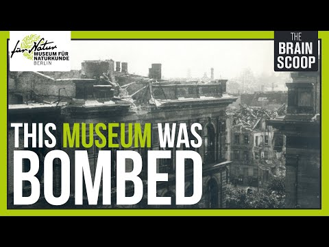 200 years, WWI & WWII, Communism: The Story of Berlin's Natural History Museum