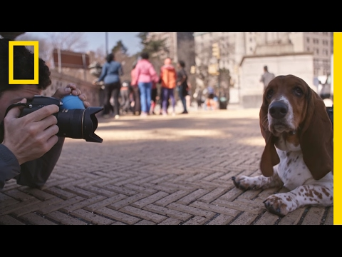 A Day in the Life of 'The Dogist,' Pet Photographer Extraordinaire | Short Film Showcase