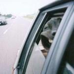 Hundecontent Klassiker Fundump