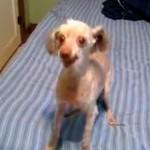 15 Minuten Hundespaß – Hunde Videodump
