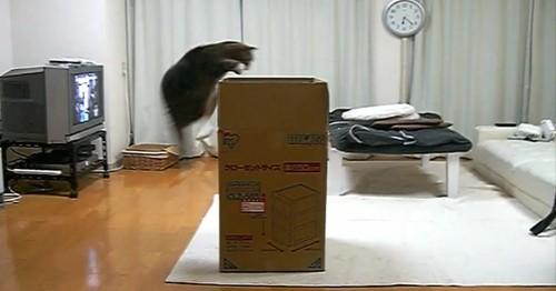 maru-und-die-grosse-kiste