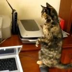 Molly, die Katze hat furchtbare Angst vor dem Drucker