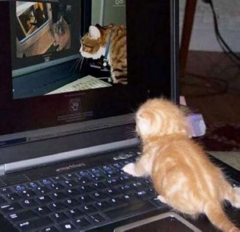 Eine Katze schaut sich Online eine Katze an die sich Online eine Katze anschaut die sich Online eine Katze anschaut