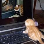 Blogparade mit Gewinnchance: Katzen schauen Katzen im Internet an
