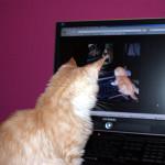 Auswertung und Umfrage zur Katzen schauen Katzen im Internet an Blogparade