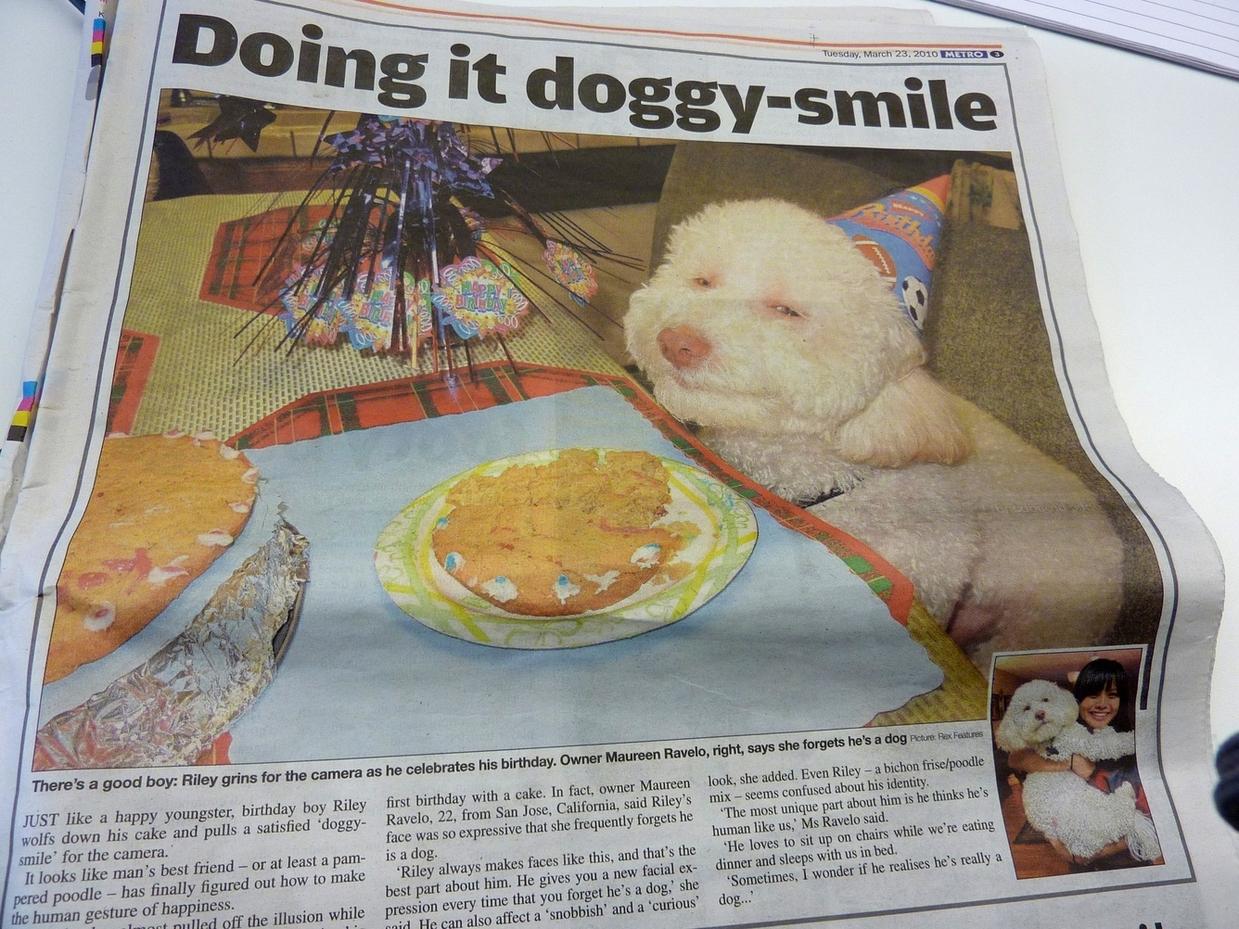 Stoned birthday dog - photo#27