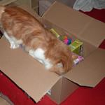 Ein Paket für die Katzis