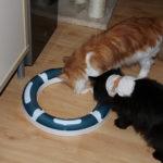 Gehirntraining für unsere Katzen