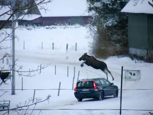 Schweden Elch Volvo