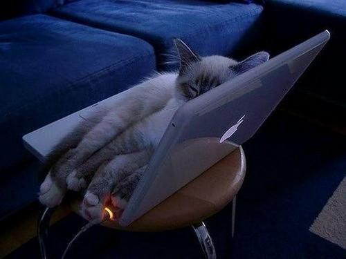 Cat sleeping on MacBook
