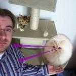 Die coolste iPhone App aller Zeiten: CatPaint – Katzen-Photoshop für das iPhone