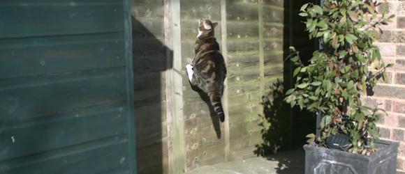 Katze Slow Motion