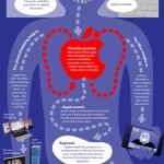 Infografik: 'The Anatomy of An Apple Rumor' – Welchen Weg gehen Apple Gerüchte