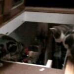 Catcontent: Garstige Katze & Tolpatschige Katze