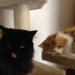 Katzen-Foto-Story #2 – Das Stück Hühnchen + Lazy Kater