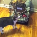 Katzen nehmen Hunde als Geiseln