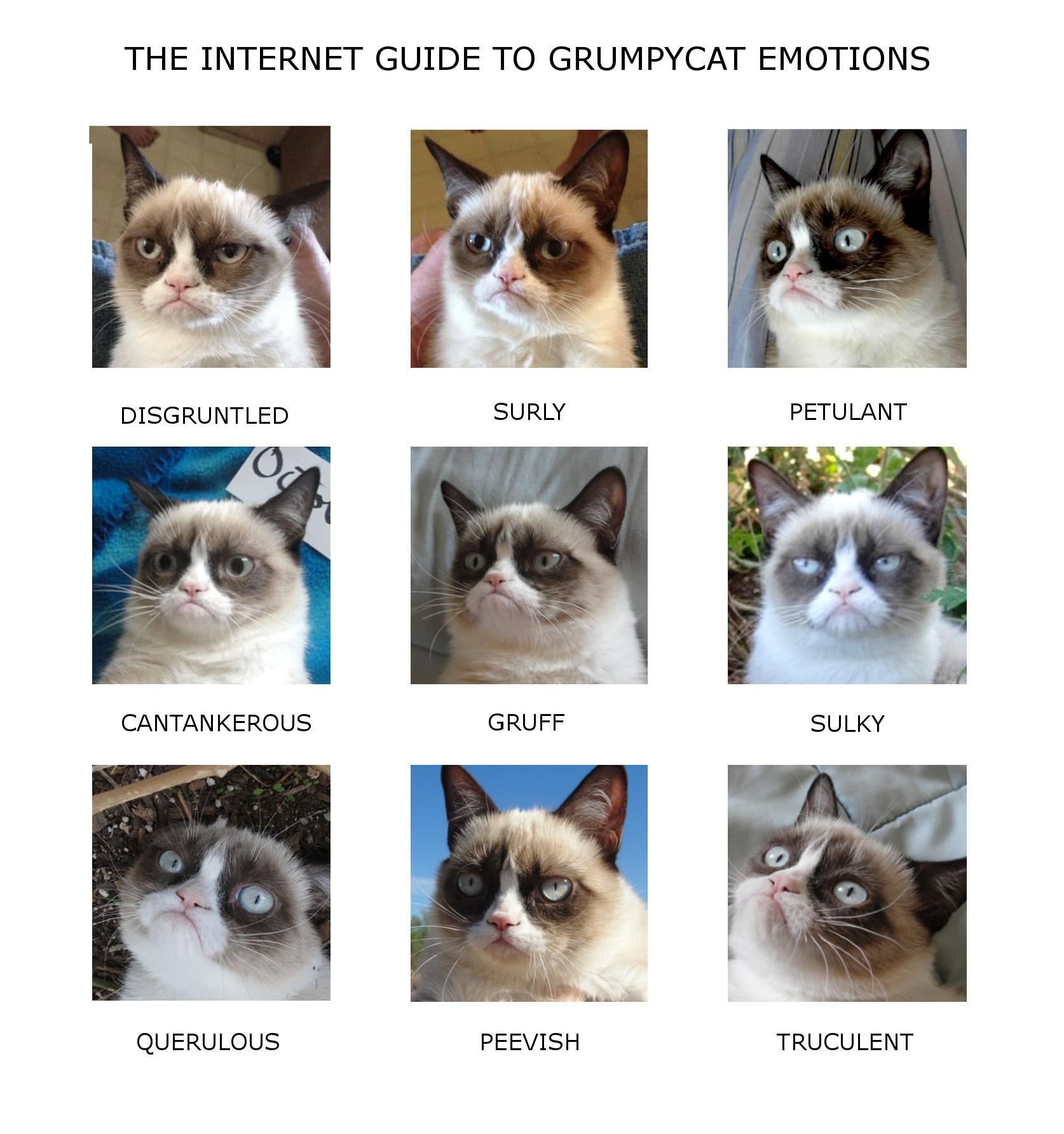 Grumpy Cat Emotion Chart Gilly S Playground