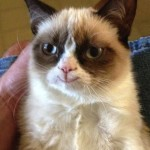 Grumpy Cat mal nicht grumpy