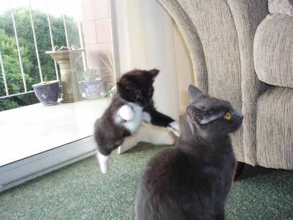 Katze klaut einen hundekeks aber