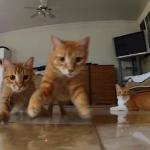 Das ultimative Katzen vs. Laserpointer Video