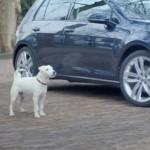 Hund macht Geräusche wie ein Auto