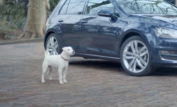 Hund Autogeräusche VW