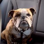 Volkswagen Werbespot: Böser Hund!