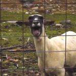 Skrillex & ein paar Ziegen – First of the Year