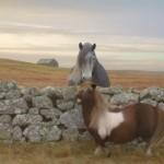 Eigentlich finde ich Pferde total scheiße, aber…