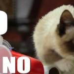 Werbespot mit Grumpy Cat