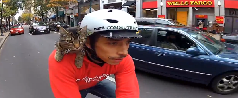 Simon S Cat Cuddling