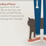 Infografik: Das Schnurren von Katzen hat Heilkraft