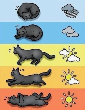 Cat Weather Forecast