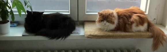 Bebbie & Barnabas
