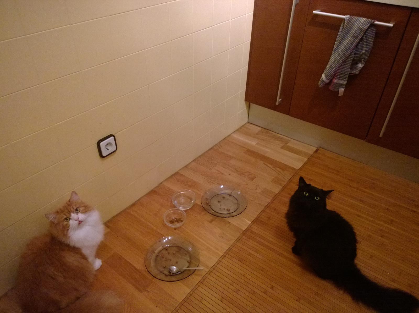 Hungrige Katzen