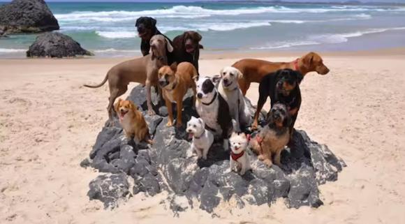 Hunde am Strand