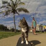 Das Super Skateboarding Adventure von Katze Didga