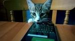 Katzen Lumia 930