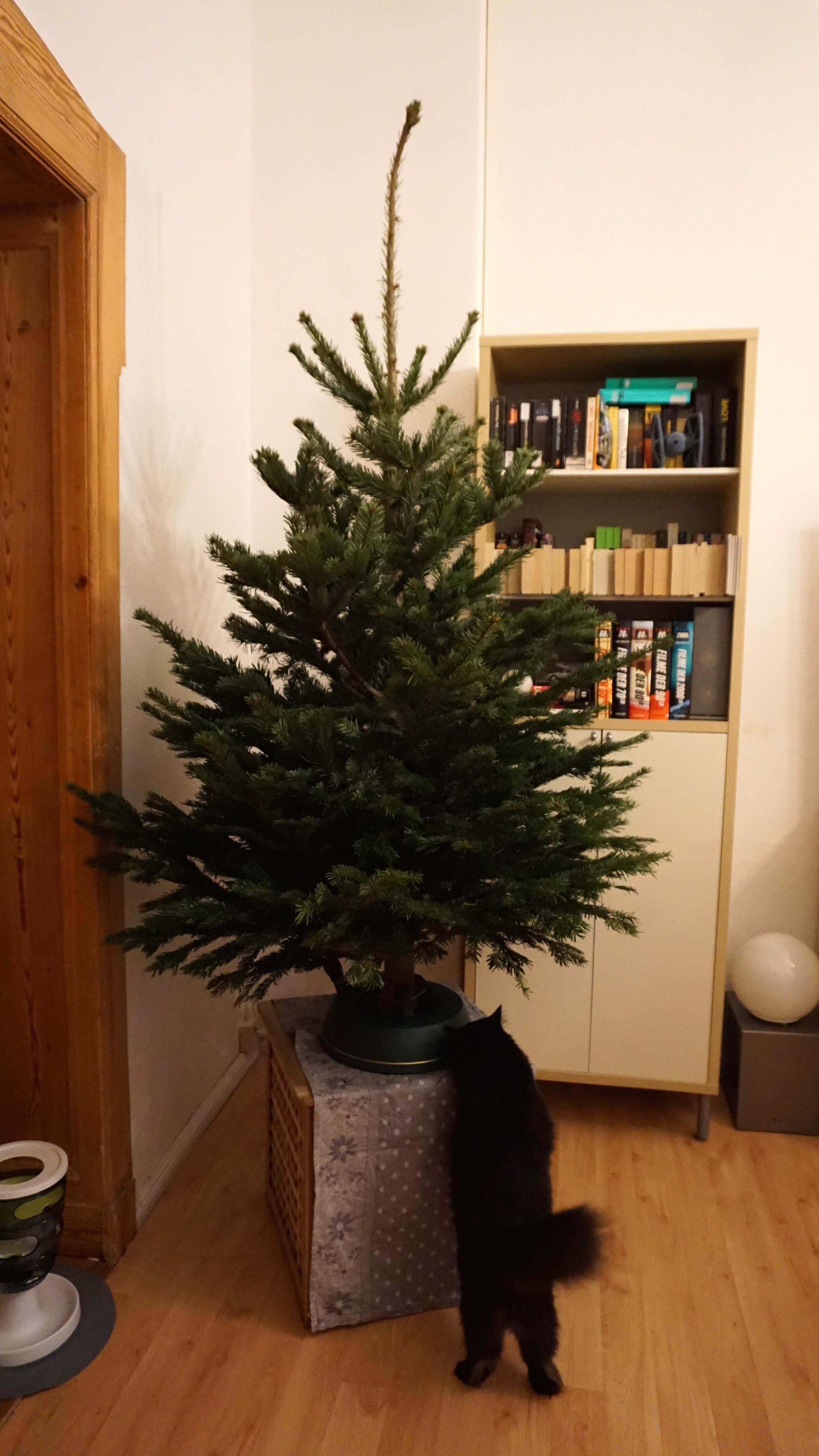 Ich habe mir einen weihnachsbaum bei amazon bestellt gillyberlin - Amazon weihnachtsbaum ...