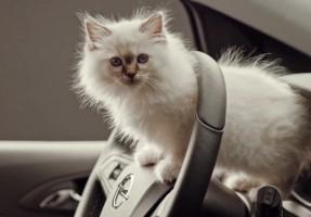Opel Werbespot Katzen