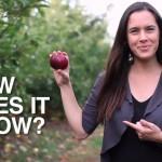 Kurz-Doku über den Anbau von Äpfeln