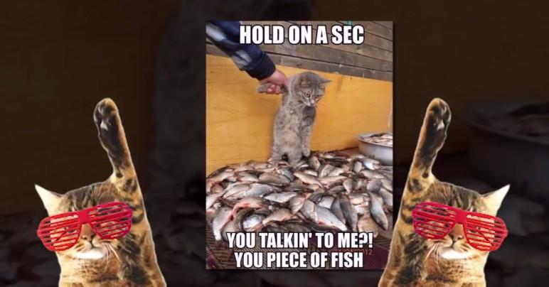 King of Making Cat Memes