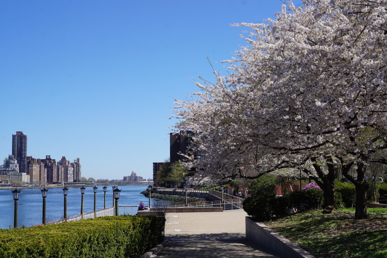Gilly in New York - Roosevelt Island 08