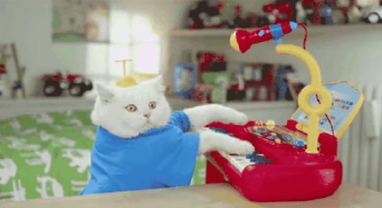 All Meow Life