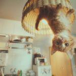 Gravity Cat ist ein ziemlicher cooler Kurzfilm, der Werbung für das Spiel Gravity Rush 2 macht